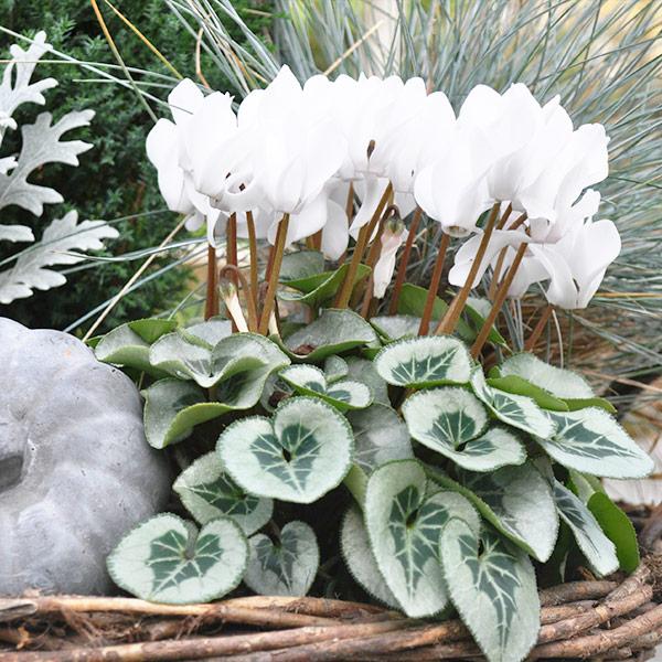 plantes pour le cimetière : la sélection de votre horticulteur en